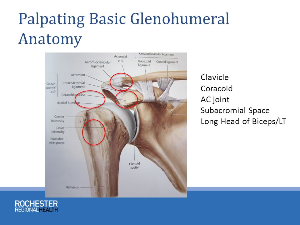 ANATOMY AND PHYSICAL EXAM OF THE SHOULDER - ppt video online download