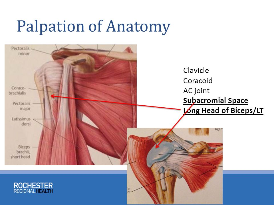 Anatomy And Physical Exam Of The Shoulder Ppt Video Online Download