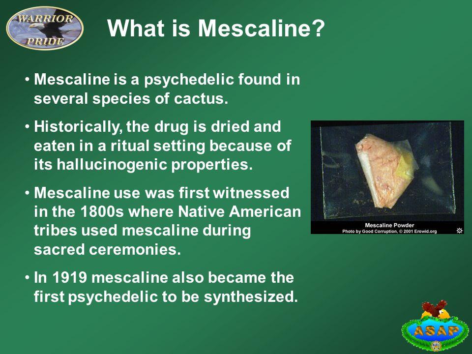 history of mescaline