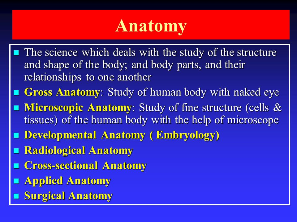 Introduction To Anatomy Skeletal System Ppt Video Online Download