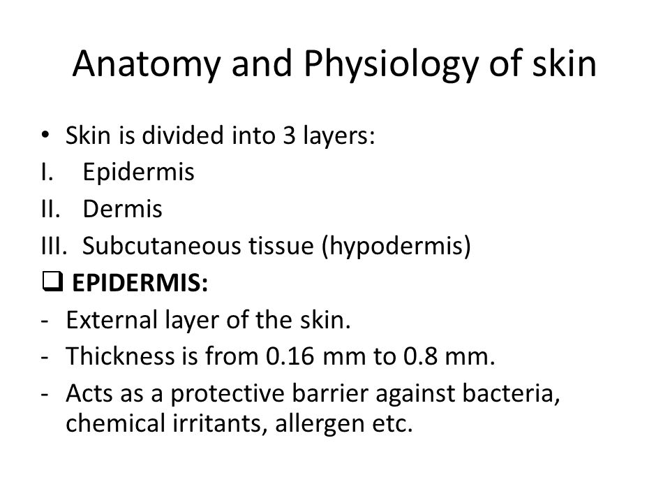 Awesome Anatomy And Physiology Of Skin Photos - Human Anatomy Images ...