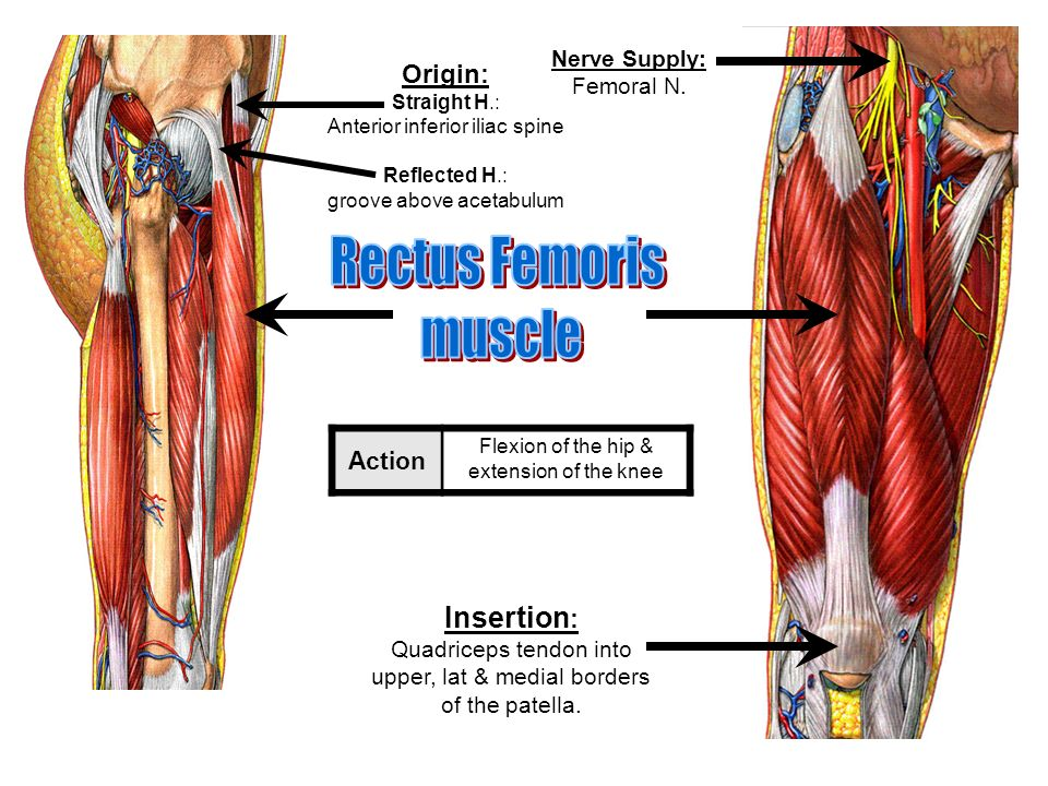 Muscles of the Lower Limb. - ppt video online download