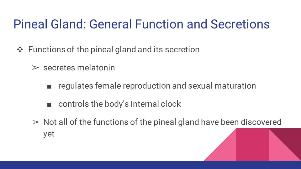 The Anatomyphysiology Of The Gonad Pineal And Thymus Glands Ppt