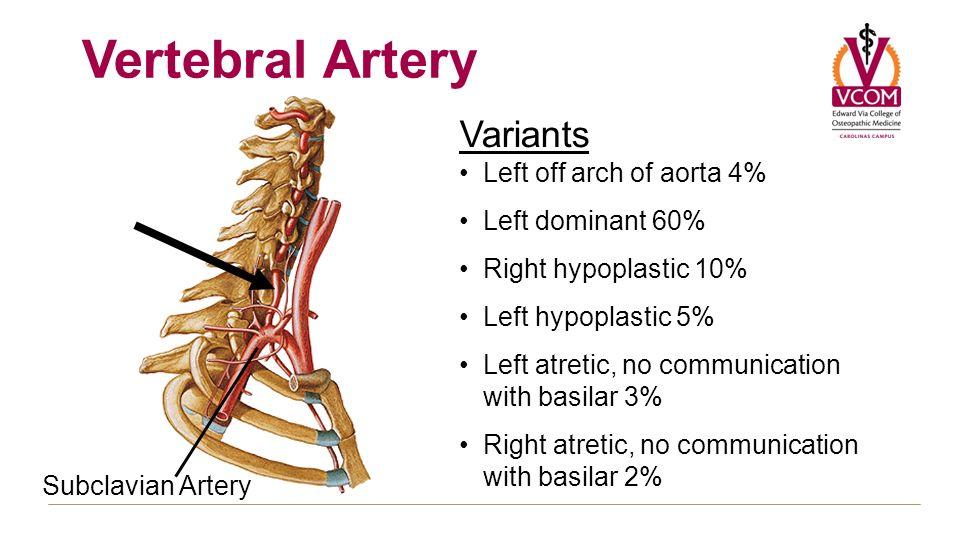 Blood Supply Fall 2012 General Concepts Internal Carotid Artery