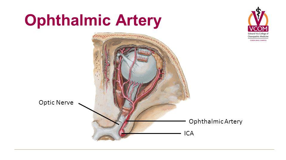 Blood Supply Fall 2012 General Concepts Internal Carotid Artery ...
