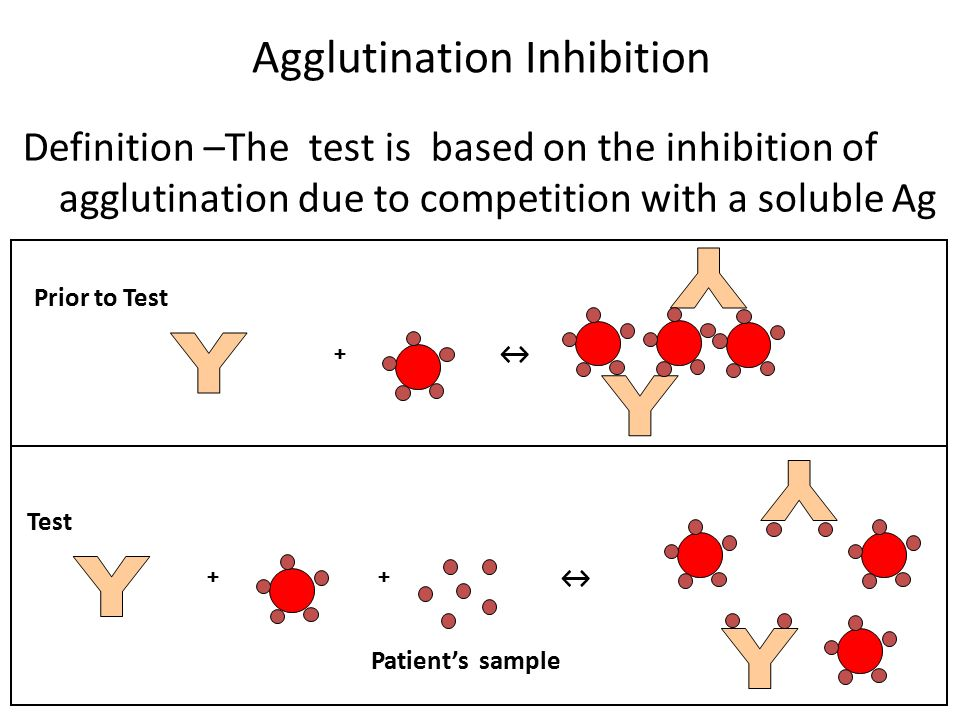 indirect haemagglutination ppt video online download