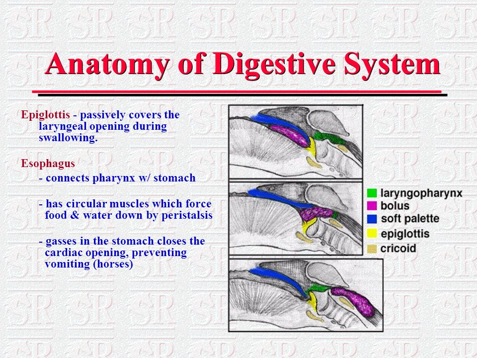 The Gastrointestinal Tract and Nutrition - ppt video online download