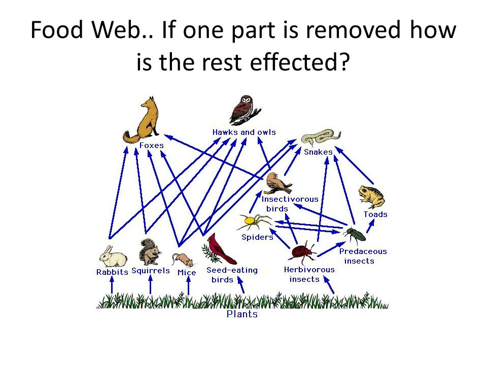 Ecology Biomes And Biodiversity Unit Ppt Video Online Download