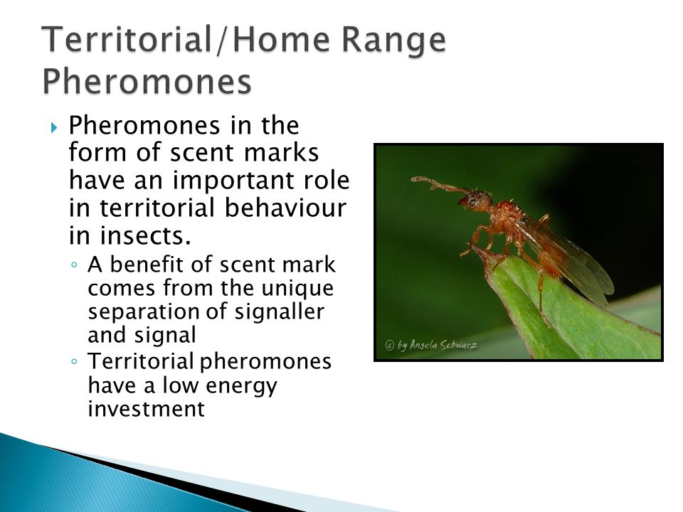What are benefits of insect sex attractants pheromones