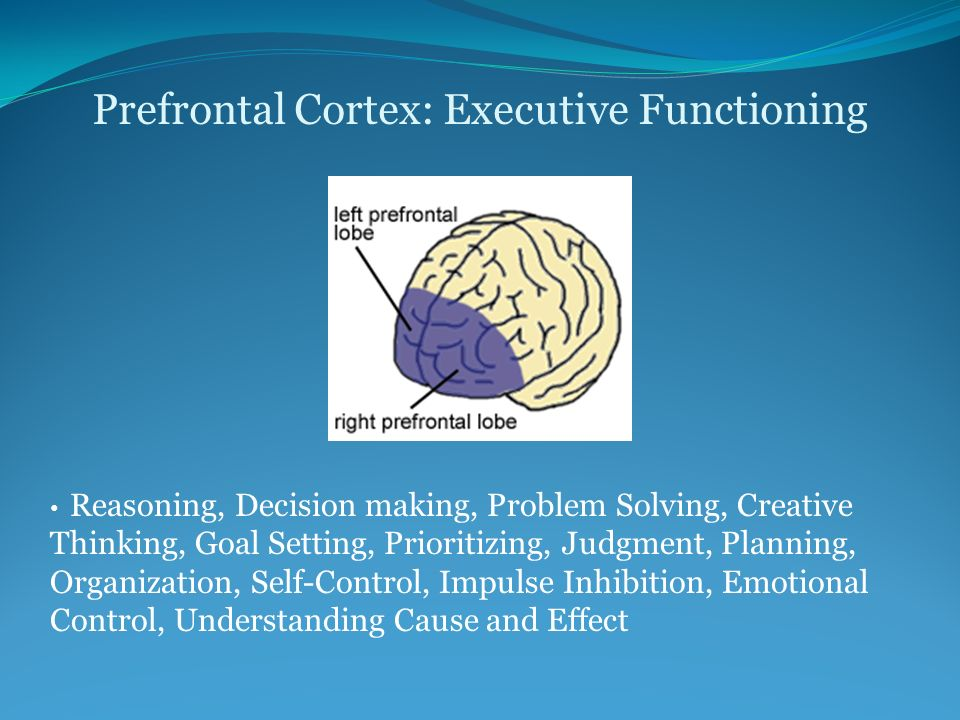 The Adolescent Brain Why Executive >> The Adolescent Brain Still Growing Ppt Video Online Download
