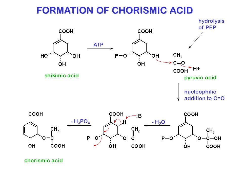 shikimic acid pathway ppt video online download
