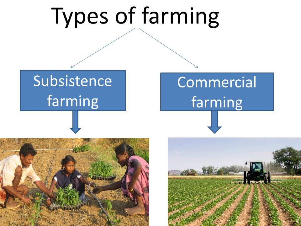 agribusiness or subsistence farming essay Drawing on primary survey data and the literature on sustainable livelihoods, we  analyse agricultural households in five new member states of the eu which.