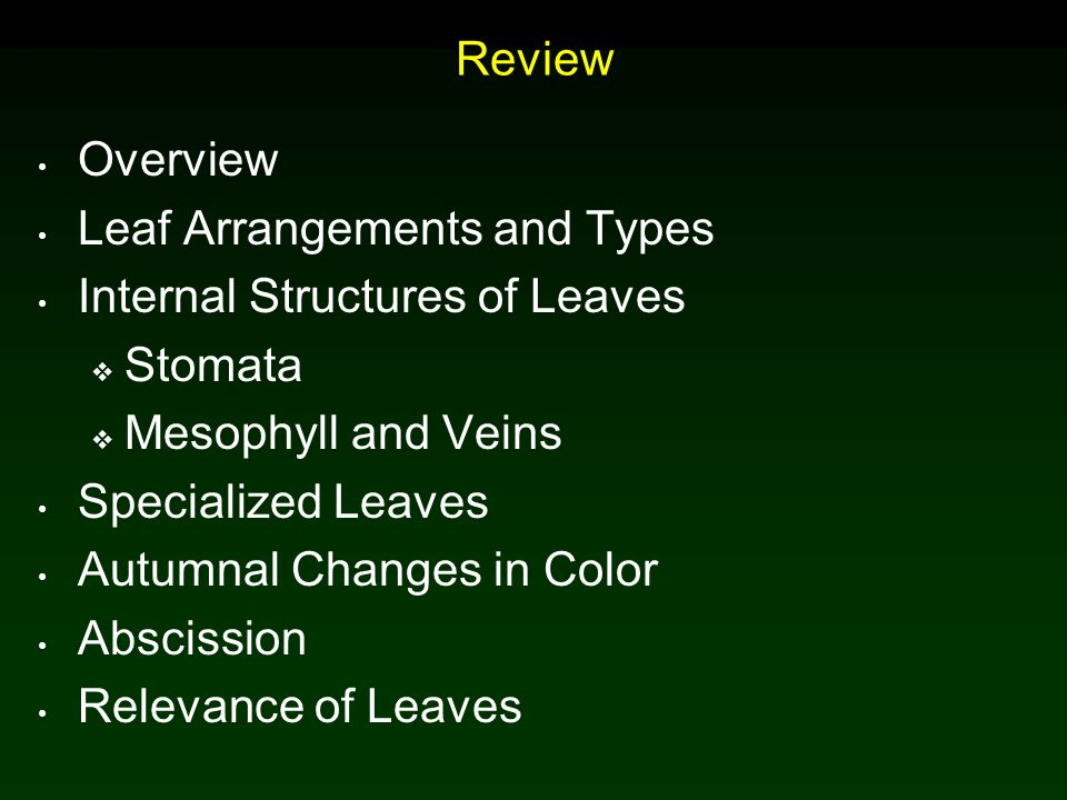 Leaves Chapter 7 Copyright C Mcgraw Hill Companies Permission