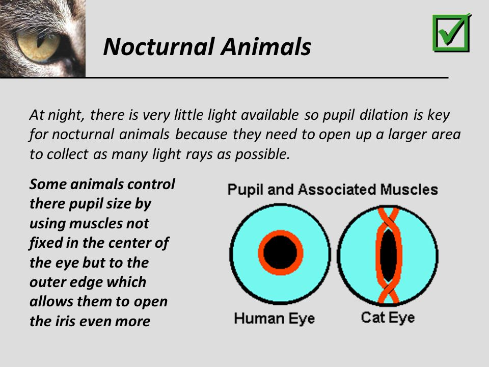 Animal Eye Adaptations - ppt video online download