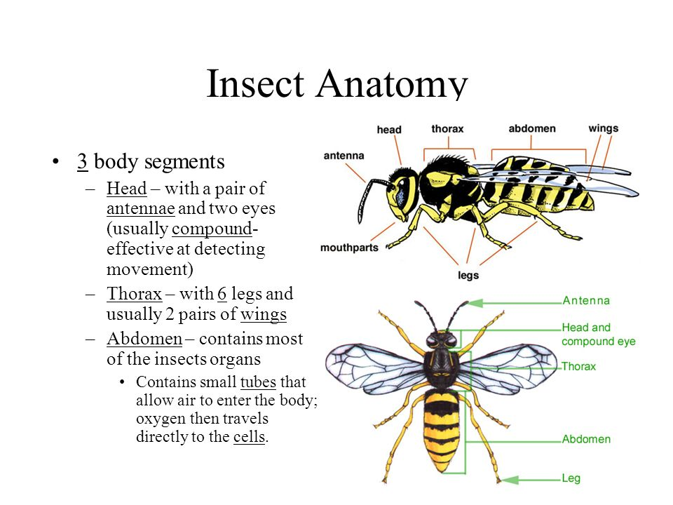 Insects. - ppt download