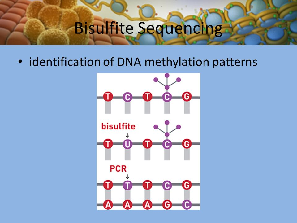The Importance of Epigenetic Phenomena in Regulating