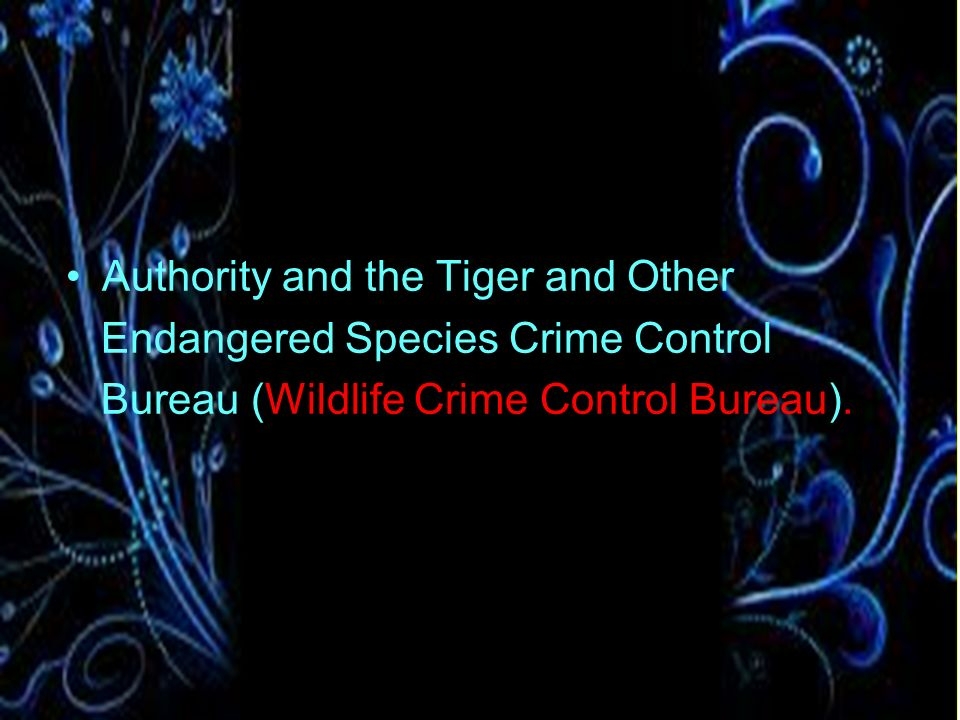 Authority and the Tiger and Other