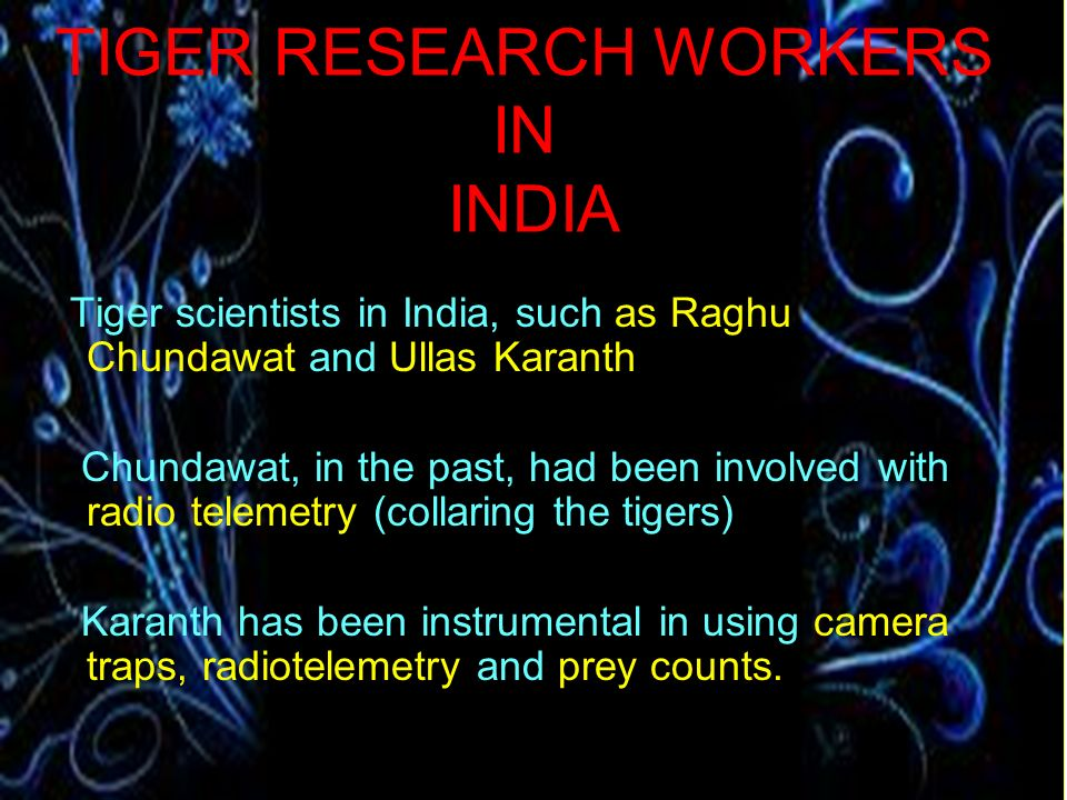 TIGER RESEARCH WORKERS IN INDIA
