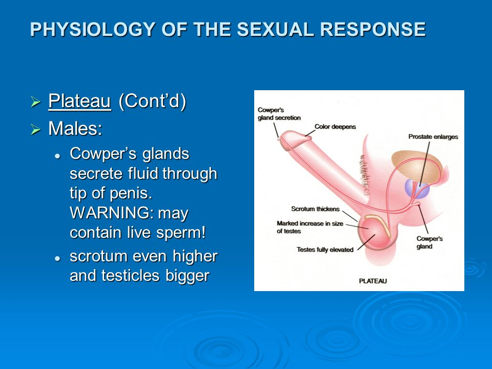 sex-video-physiology-of-virginity