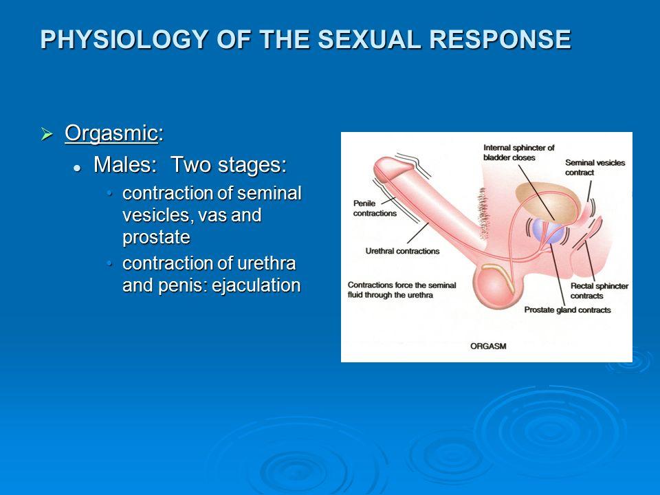 Anatomy Of Sex