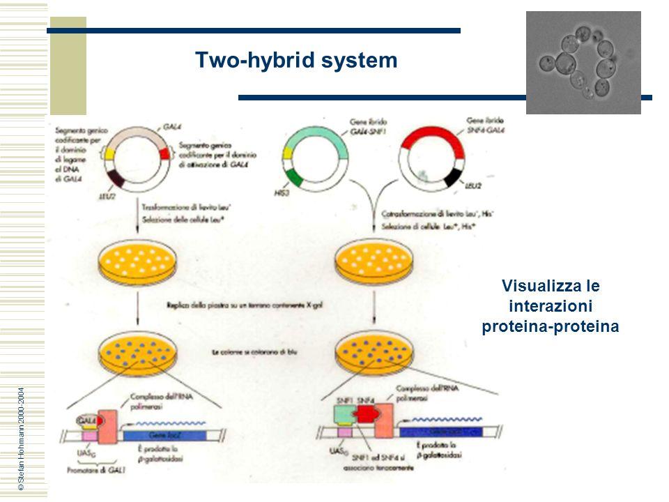 13 Visualizza Le Interazioni Proteina Two Hybrid System