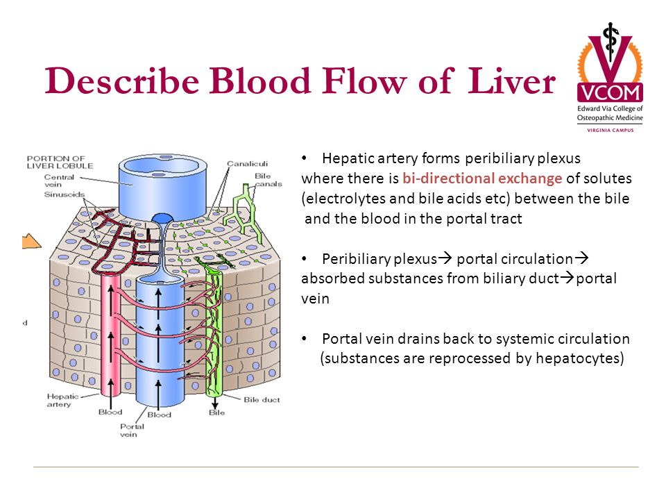 Liver Transport And Metabolic Functions I Ppt Download