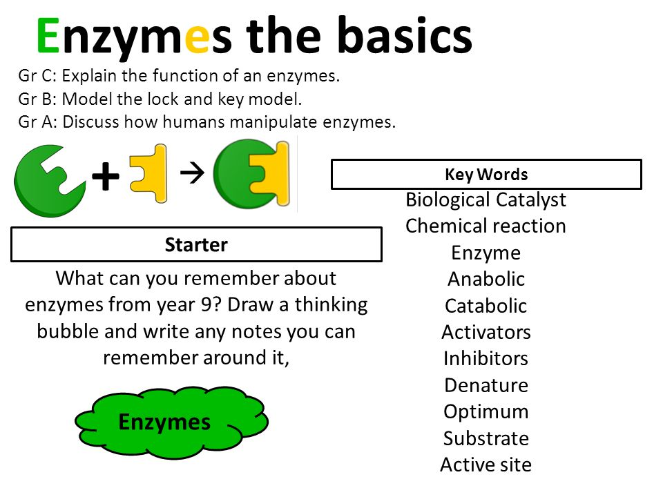 Photosynthesis bozemanscience