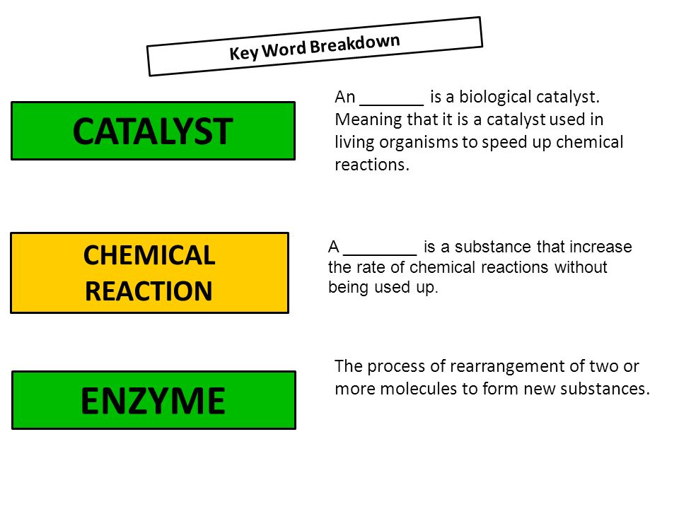 Enzymes the basics  Enzymes Biological Catalyst Chemical reaction - ppt  video online download