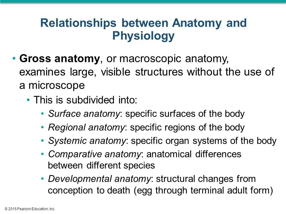 Contemporary Whats The Difference Between Anatomy And Physiology ...
