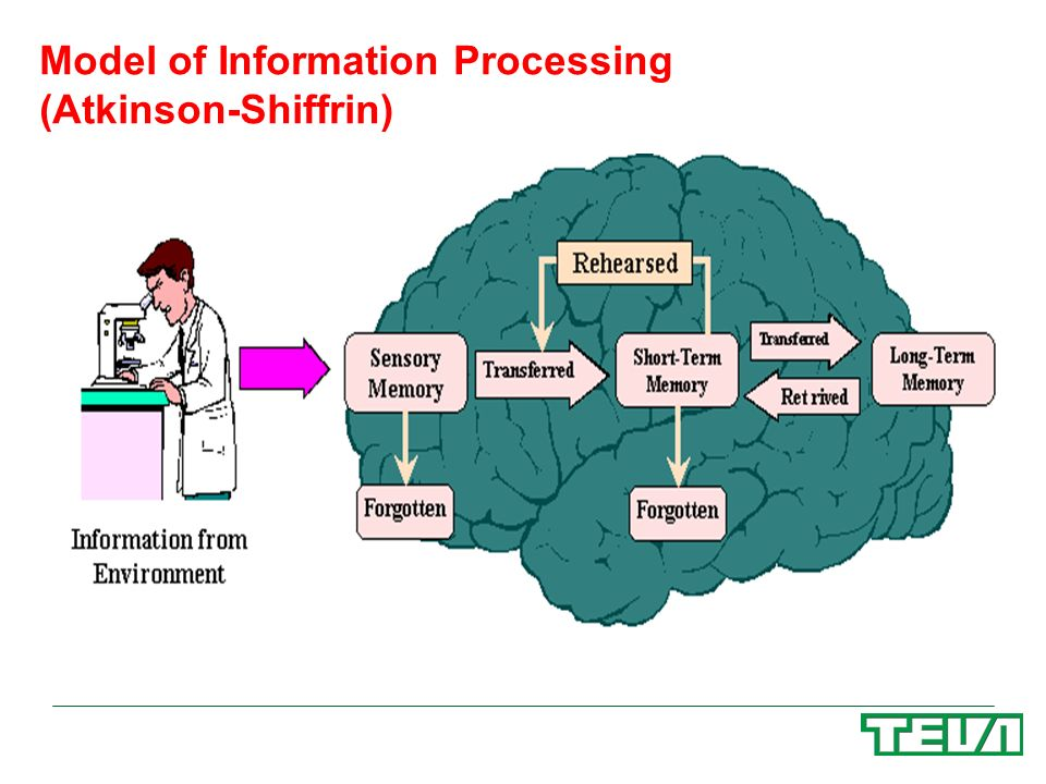 Model of Information Processing (Atkinson-Shiffrin)