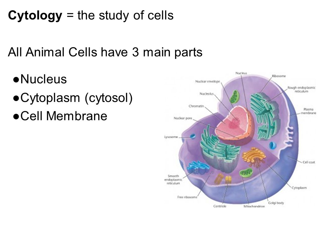 Cells Anatomy & Physiology. - ppt video online download
