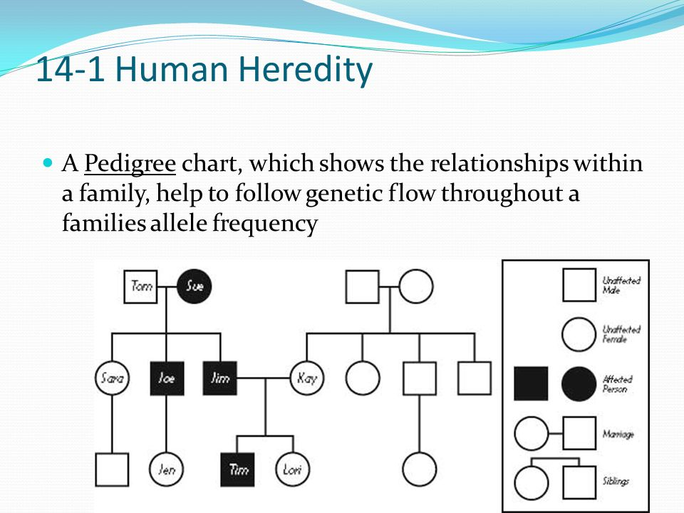 Ch 14 The Human Genome 14-1 Human Heredity 14-2 Human ...