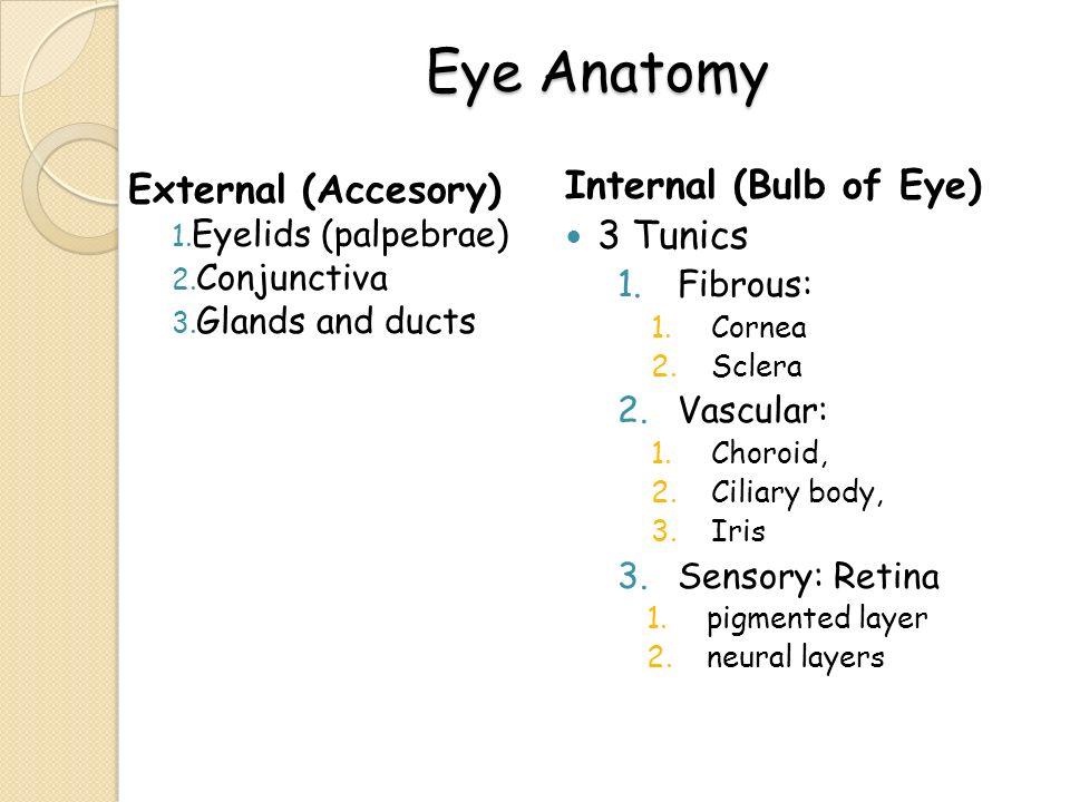 Eye Department of Histology histologi.usu.ac.id - ppt video online ...
