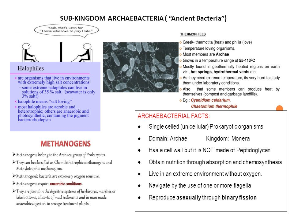 Ppt archaebacteria and eubacteria powerpoint presentation id.