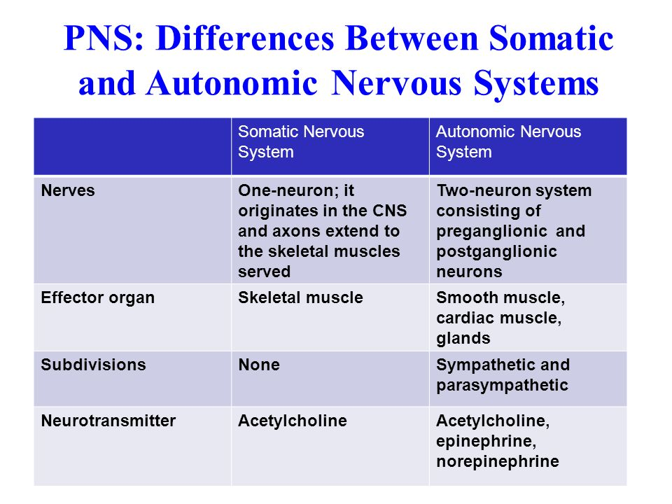 automatic and somatic nervous system