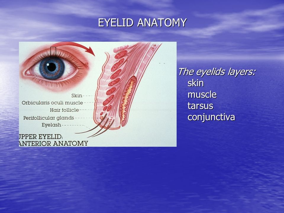 Lecture 1 DISEASES of EYELIDS, LACRYMAL SYSTEM & ORBIT - ppt video ...