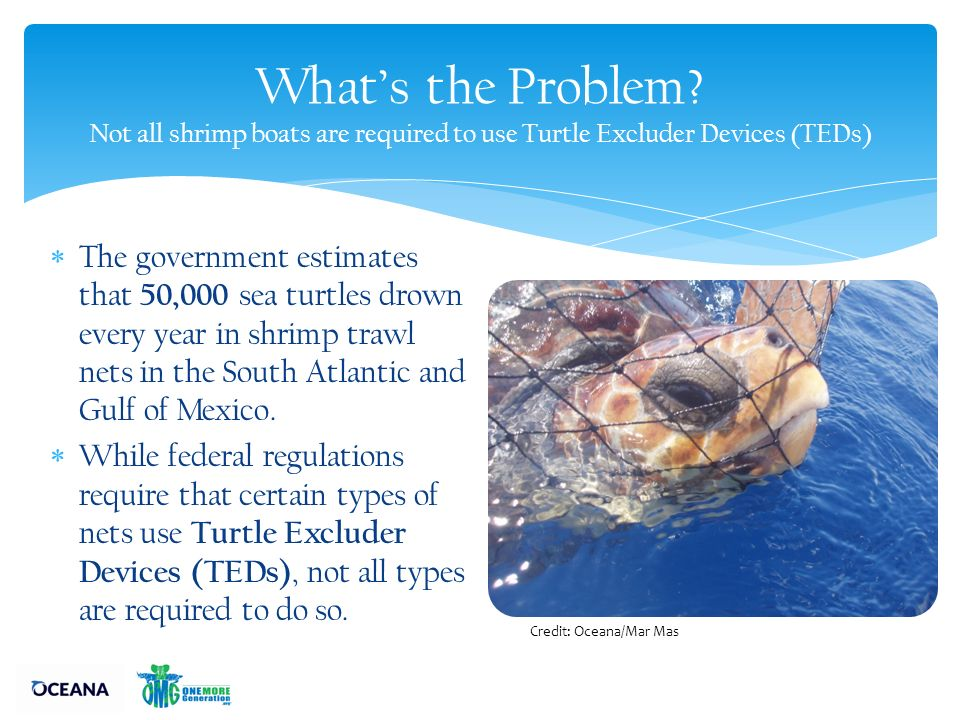 Protect Sea Turtles from Shrimp Trawl Nets in the Southeast - ppt