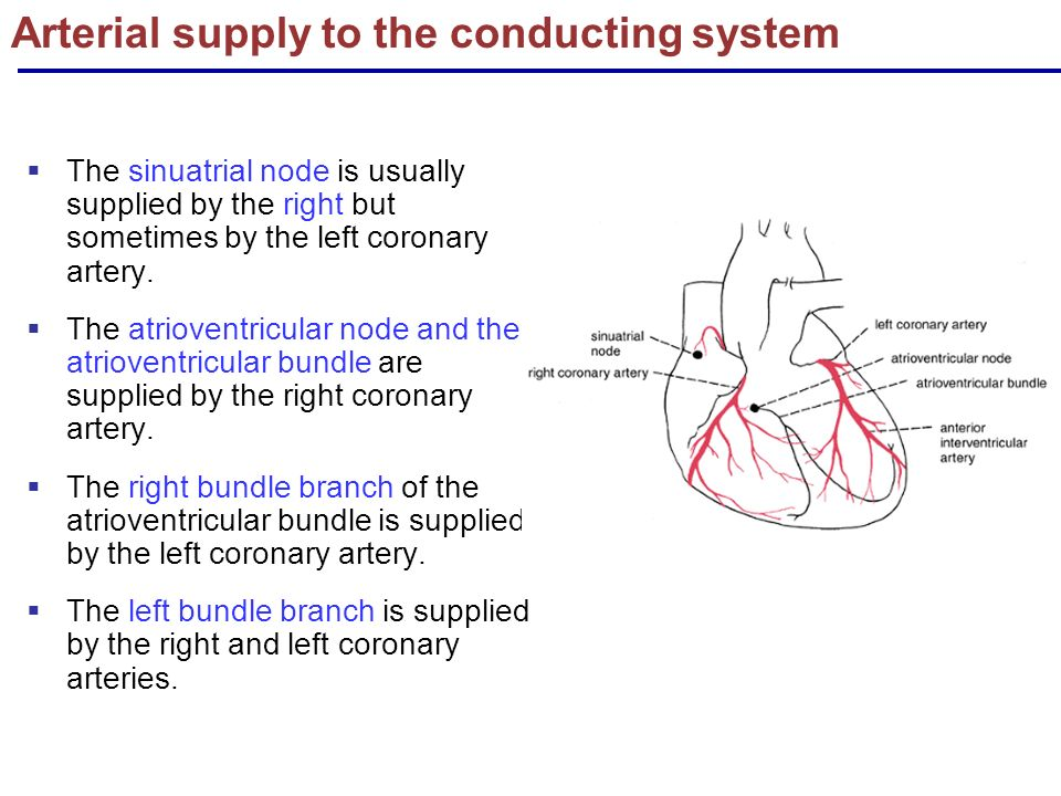 Blood Supply Of Heart Ppt
