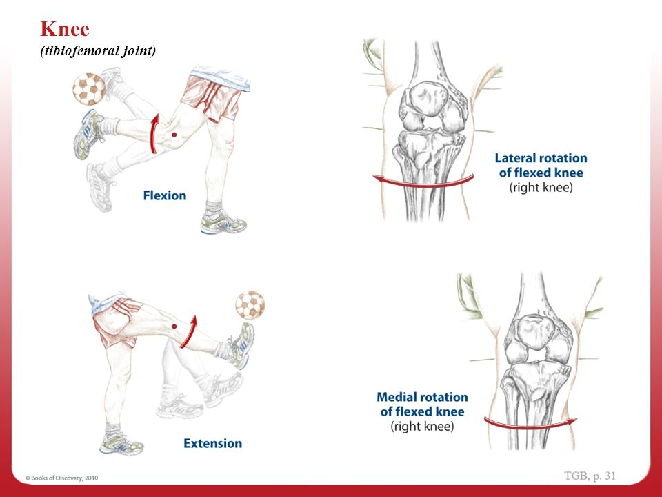 Anatomical Position 1 Navigating The Body Ppt Video