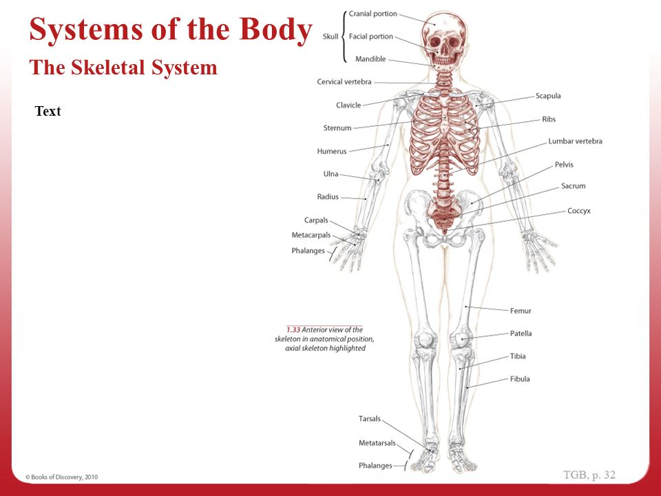 Anatomical Position 1 Navigating The Body Ppt Video Online Download