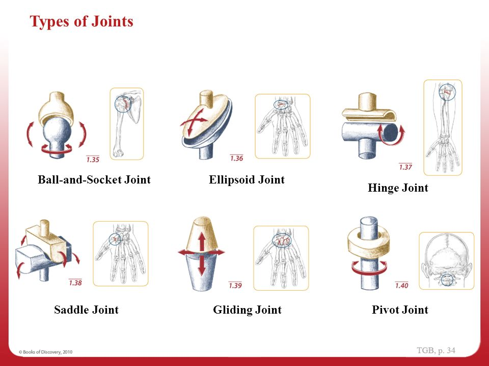 Ellipsoid Joint Diagram Complete Wiring Diagrams