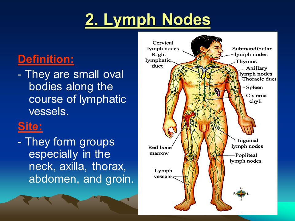 Lymphatic System And Axillary Lymph Nodes Ppt Video Online Download