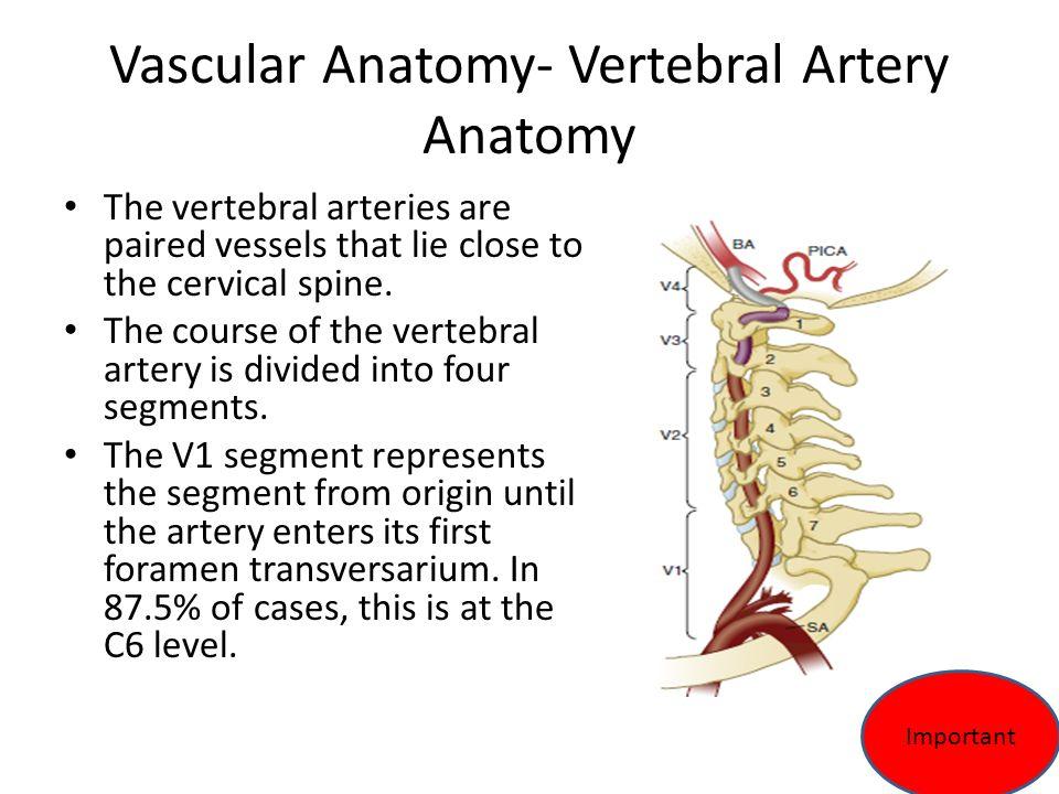 The Vertebral Column Drqussay Salih Alsabbagh Neurosurgery