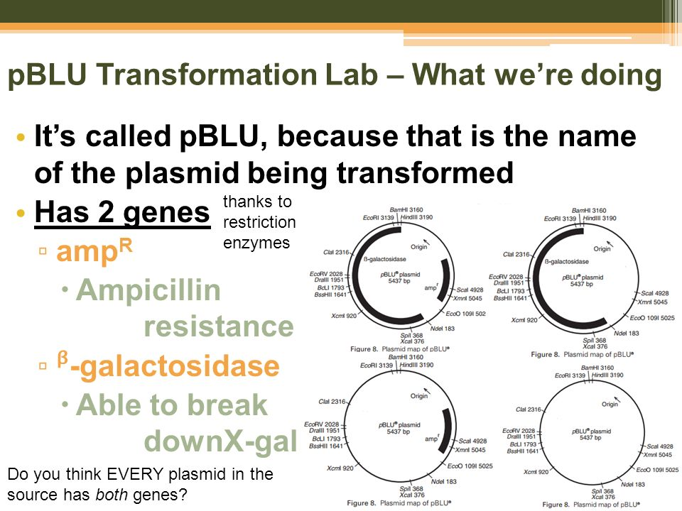 importance of plasmids
