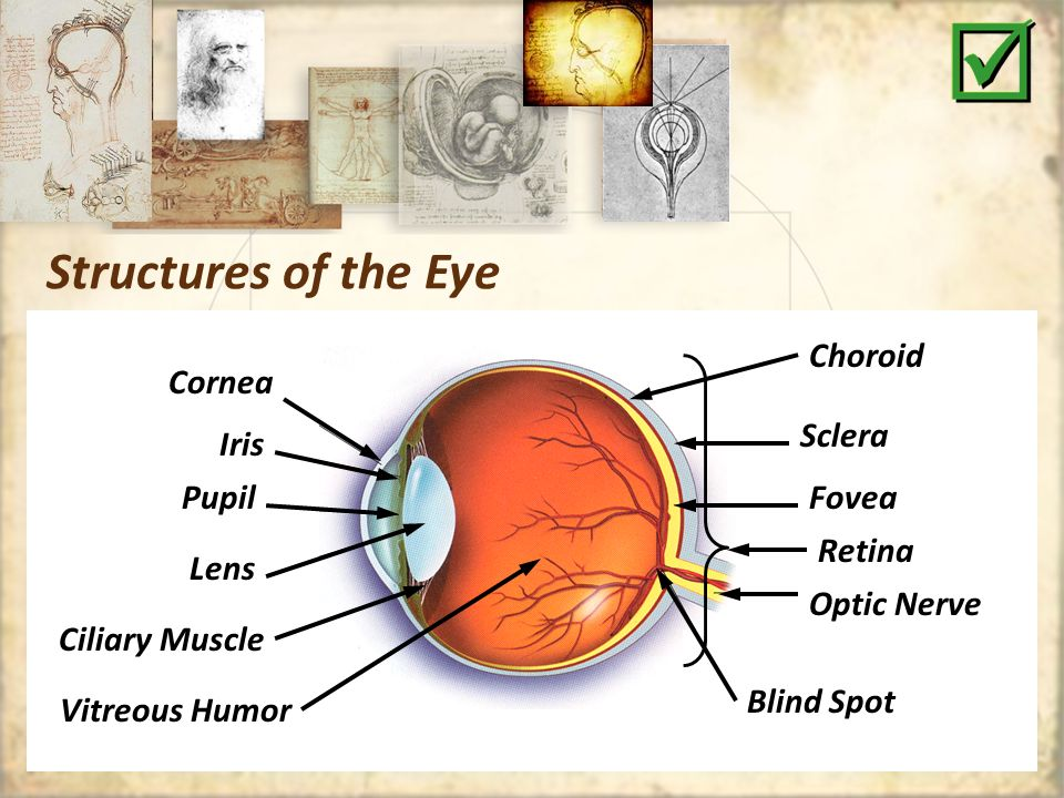 The Human Eye Structure Function Abnormalities Dissection Of The