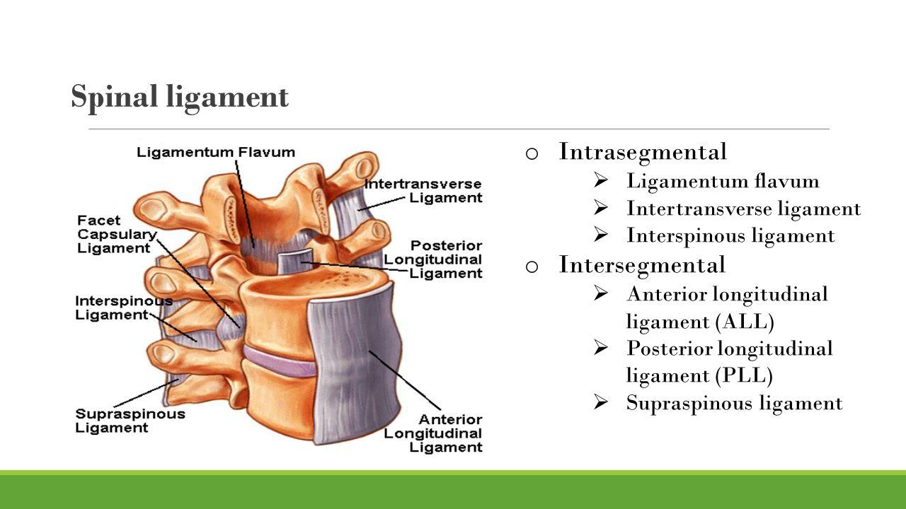 Degenerative disease of Lumbar spine - ppt video online download