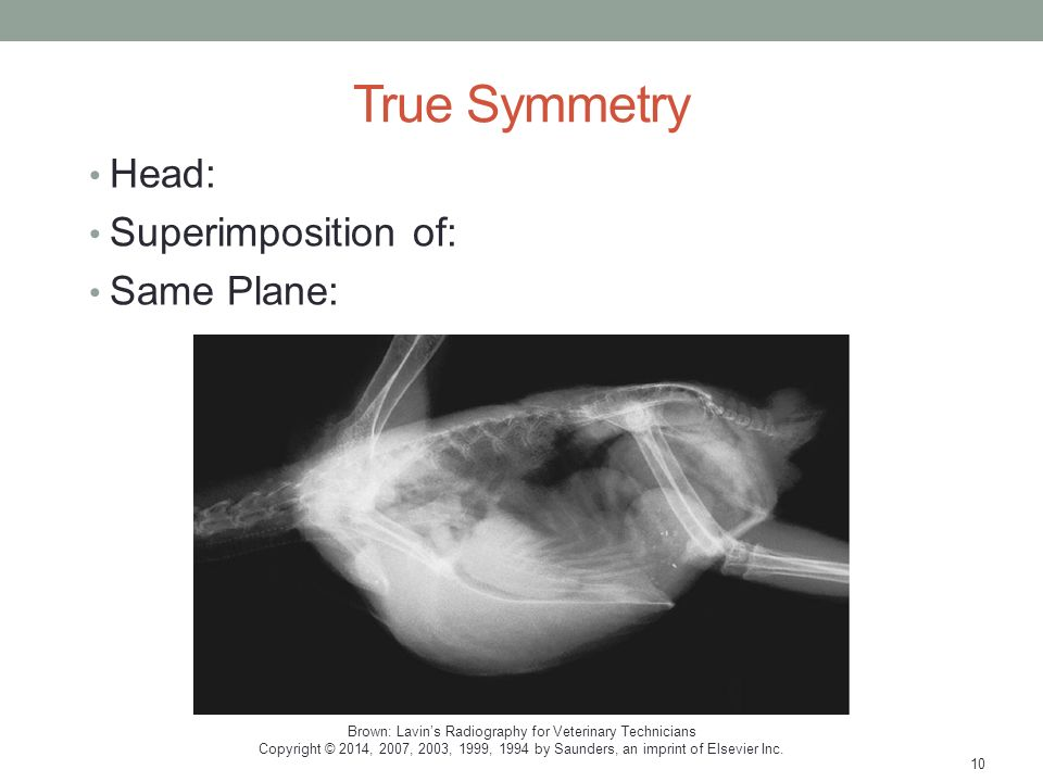 Avian And Exotic Radiography Ppt Download