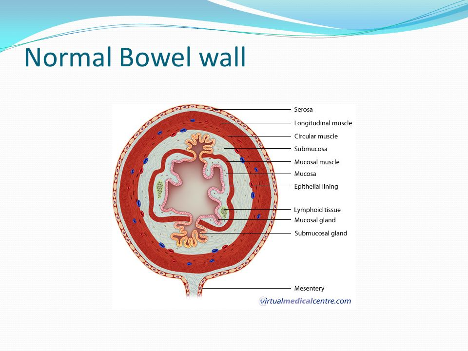 Abdominal Sonography I Lecture 8 Gastrointestinal Tract Ppt Video