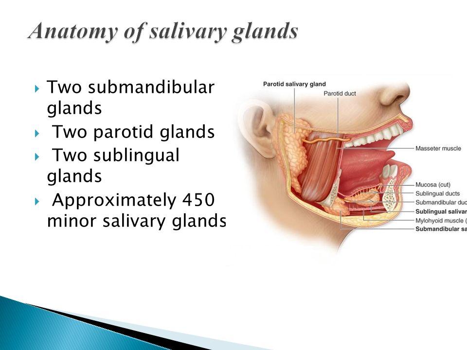Salivary Glands Dr Zaid Muwafaq Al Hamid Ppt Video Online Download