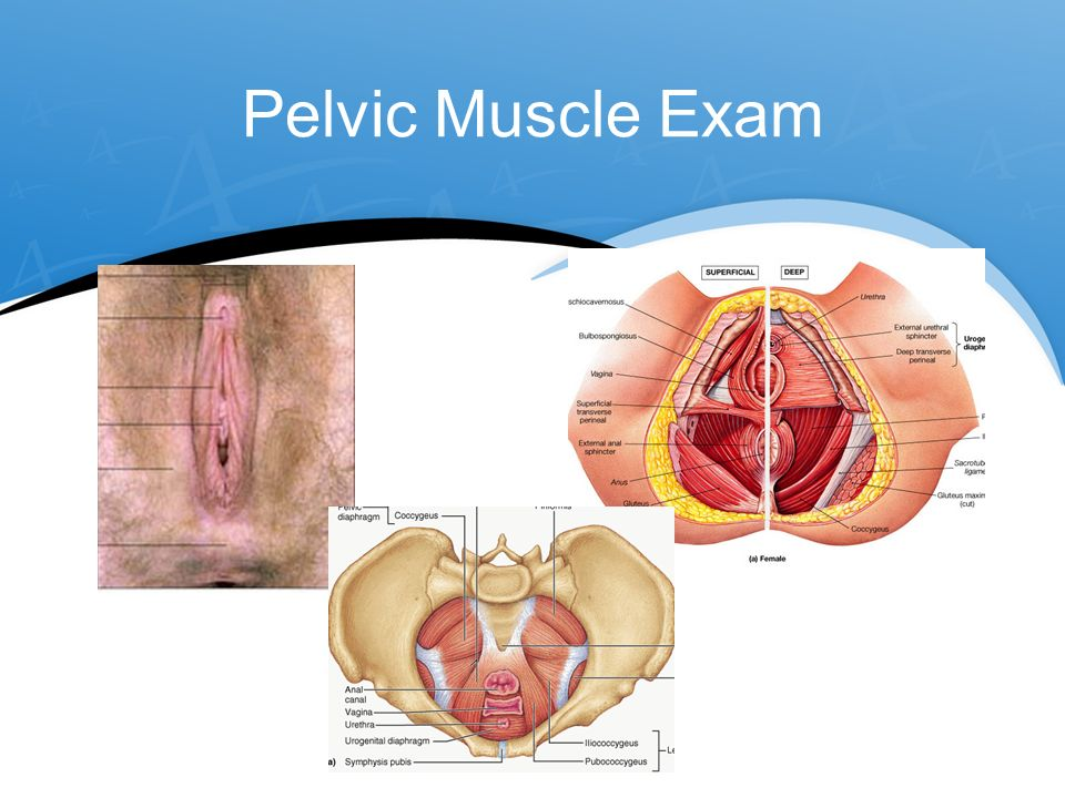 The Uptight Pelvic Floor Ppt Video Online Download